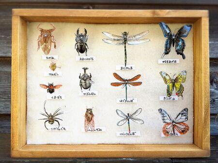 写して描いて!プラ板で虫ピン標本箱の作り方!