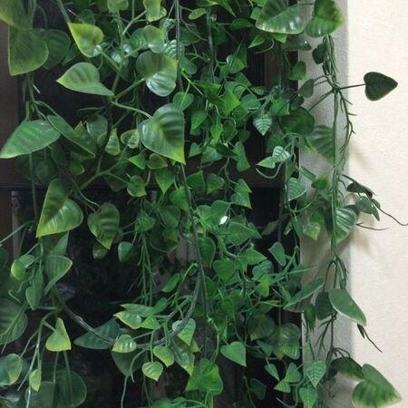 100均で作る緑のカーテン