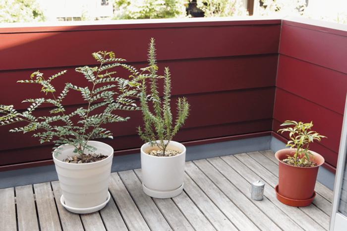 お気に入りの植物が並んだバルコニー