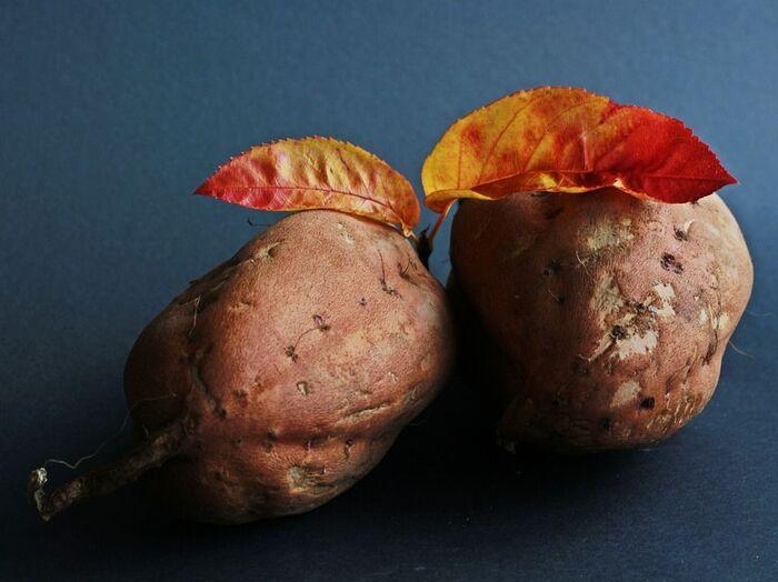秋の味覚のさつまいもを甘くする方法