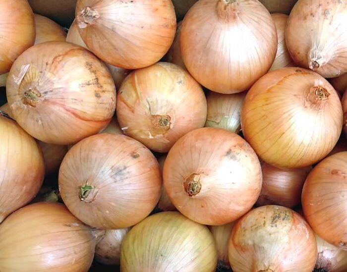 玉ねぎの写真