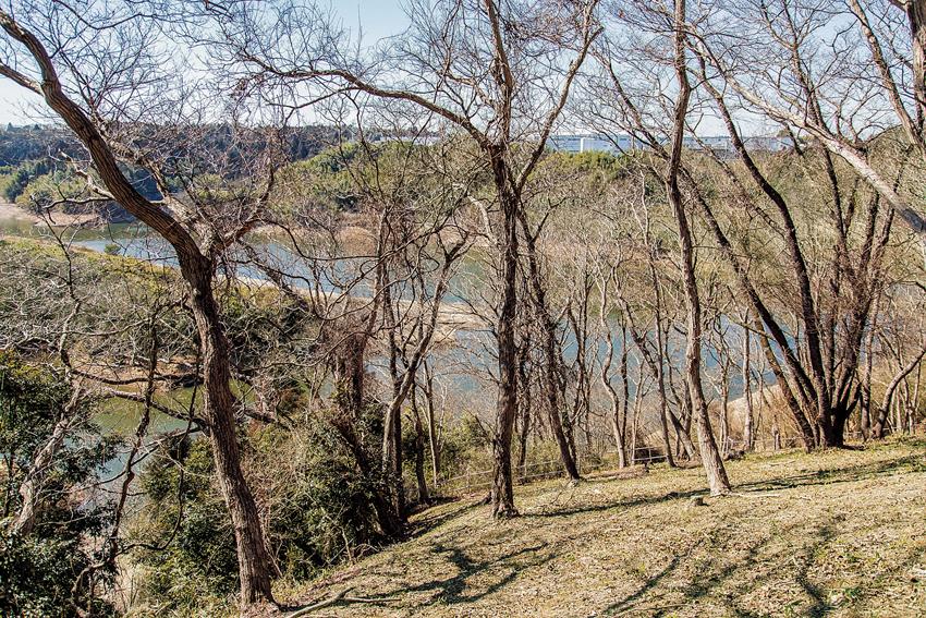 木とダム湖